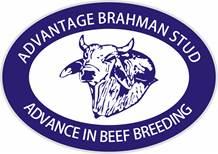 ADVANTAGE BRAHMAN STUD